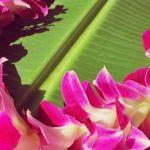 May day Lei day hawaii