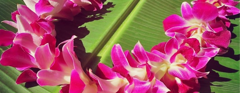 May day Lei day hawaii